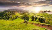 stock photo of conifers  - composite summer landscape - JPG