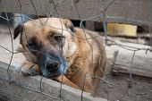 stock photo of dog eye  - Stray dog behind the corral of a dog refuge - JPG