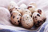 foto of quail  - raw quail eggs quail eggs on a table - JPG