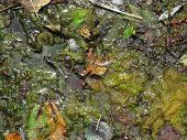 picture of algae  - Polluted river full of algae and rubbish close - JPG
