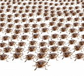 Army Of Brown Stink Bugs