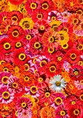 Yellow and orange flowers background