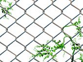 Barbed wire background with creeping ivy easy editable