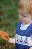 Little Boy Looking At A Leaf