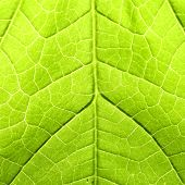 green leaf close up nature background