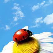 red summer ladybug
