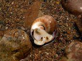 Marine Snail On Ocean Sand Stones Coast