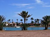 Palms near a canal in El Gouna.