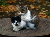 Pair Of Pitiable Homeless Small Cats Get Warming  Series 1 Of  3 poster