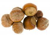 hazelnuts Isolated on a white background