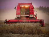 Night shot from harvest of wheat. Combine harvester working on a field. poster