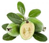 Feijoa (Acca sellowiana) - Pineapple Guava