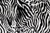 Black and white texture of zebra skin