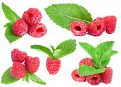 collection red raspberries
