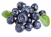 blueberry isolated over a white background