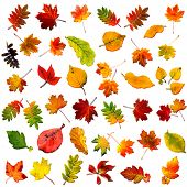 big collection beautiful colourful autumn leaves with shadows isolated on white background