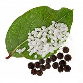 fresh bay laurel leaf with peppercorn and salt isolated on white