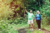Elderly couple admiring nature and walking in the woods. Sportive lifestyle. poster