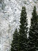 Fallen Trees 01