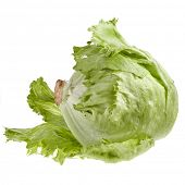 iceberg lettuce salad isolated on white