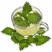 Herbal  nettle  tea  on white background