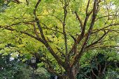 Grande árvore nos jardins