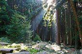 Herzynian Forest