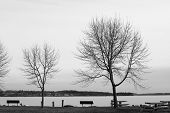 Two Trees By A Lake In Black And White