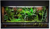 terrarium for rain forest pet animals like exotic and tropical frogs lizards and snakes.