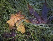 Hierba y hojas de otoño mistake