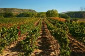 La Rioja Vineyards