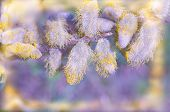 Willow Branches On A Pastel Spring Background poster