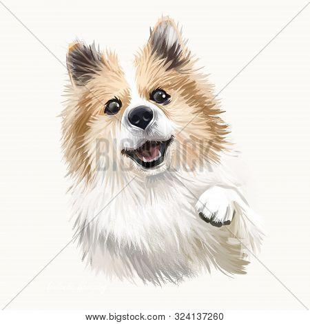 poster of Icelandic Sheepdog, Icelandic Spitz, Iceland Dog Digital Art Illustration Isolated On White Backgrou
