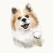 Icelandic Sheepdog, Icelandic Spitz, Iceland Dog Digital Art Illustration Isolated On White Backgrou poster