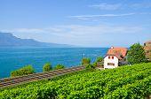 Scenic Railway Leading On The Coast Of Lake Geneva In Switzerland. Green Vineyard On The Adjacent Sl poster