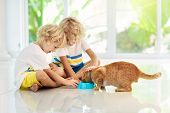 Child Feeding Cat At Home. Kid And Pet. Little Blond Curly Boy Playing With Kitten In White Kitchen  poster