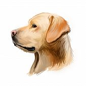Labrador Retriever Portrait Of Purebred Digital Art Illustration. Canadian Mammal Gun Dog, Hunting B poster