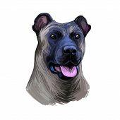 Cimarron Uruguayo Dog Portrait Isolated On White. Pet Short Haired Medium Sized With Greyish Coat An poster