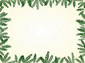Fern Leaf Frame