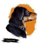 Transylvanian Or Hungarian Hound Dog Breed Portrait Isolated On White. Digital Art Illustration, Ani poster