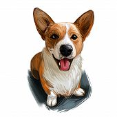 Welsh Corgi, Cardigan Dog Breed Portrait Isolated On White. Digital Art Illustration, Animal Waterco poster
