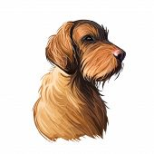 Wirehaired Vizsla Dog Breed Portrait Isolated On White. Digital Art Illustration, Animal Watercolor  poster