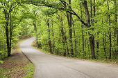 Curved road through state forest.