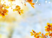 Fresh Yellow Fall Tree Foliage On Blue Sky Bokeh Background, Frame poster