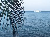 Palm Leaf Over Sea Landscape With White Boat. Neutral Seaside Abstract Photo. Tropical Seaside Backg poster