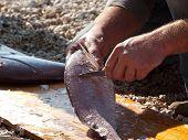 Man preparing dentex fish