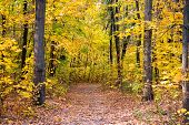 Beautiful Glorious Fall. Fall Landscape. Fall Forest Path. Leaves Turn Yellow On Trees. Golden Fall  poster