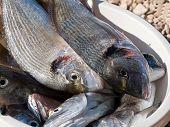 Pot full of fish