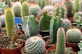 Kaktus-Auflistung