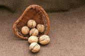 Walnuts in the old wicker basket on burlap
